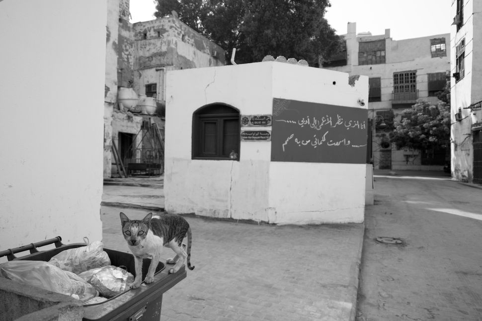 Al Balad, Saudi Arabia - The Empire of Cats