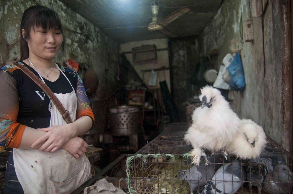 Vendor with fluffy chickens