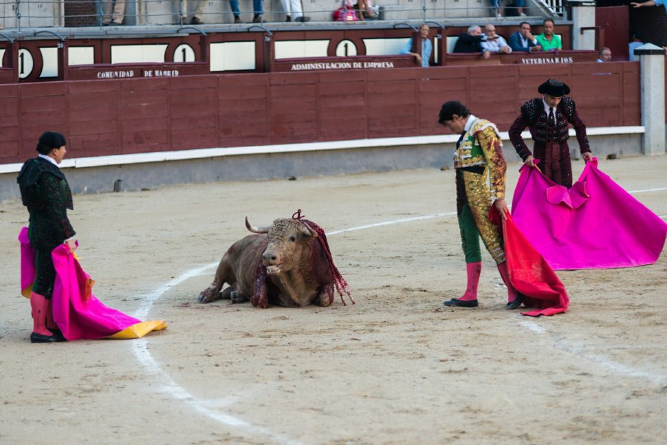 Diego Fernàndez - paying  the bull his final respects