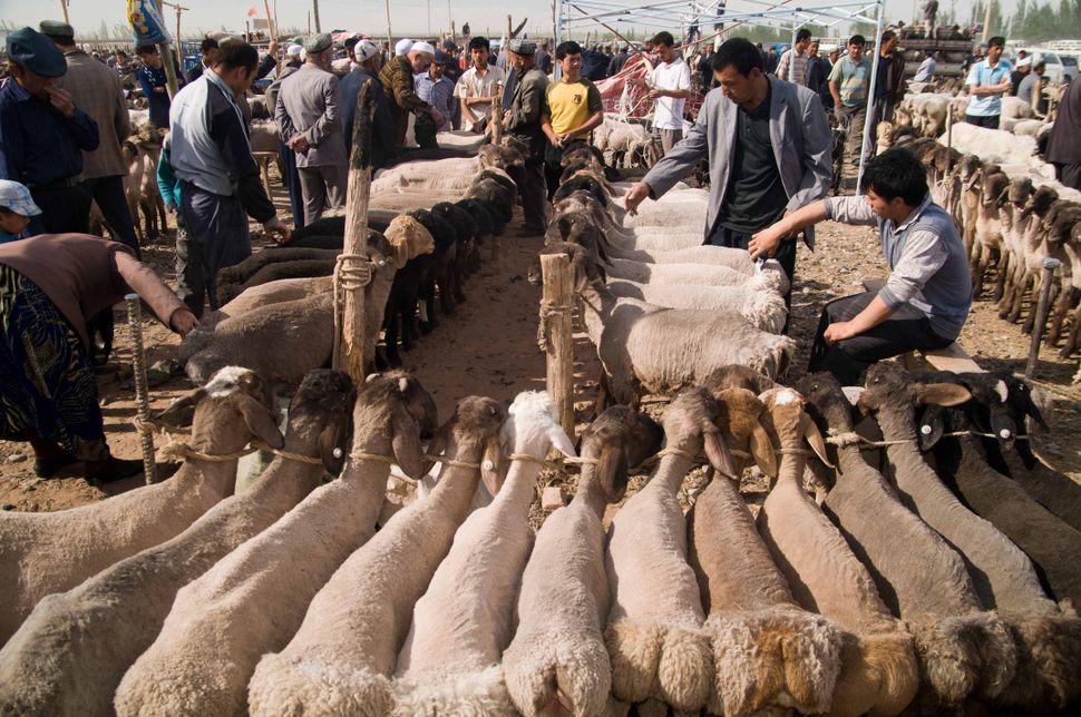 Cattle market, Kashgar, 2