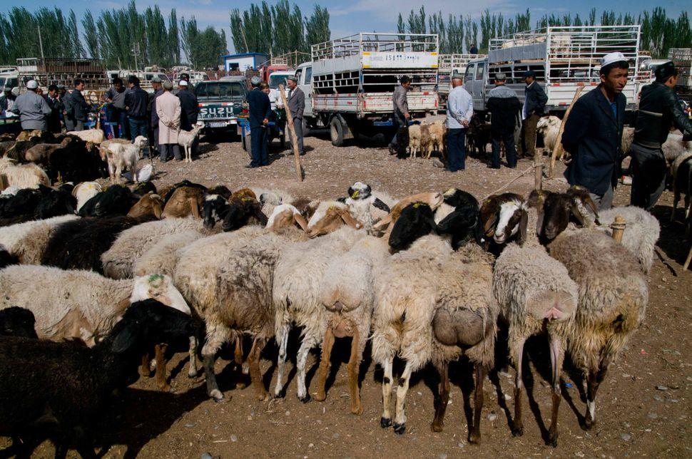 Cattle market, Kashgar, 4