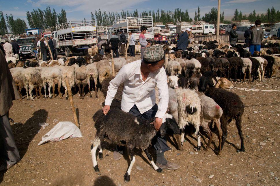 Cattle market, Kashgar, 5