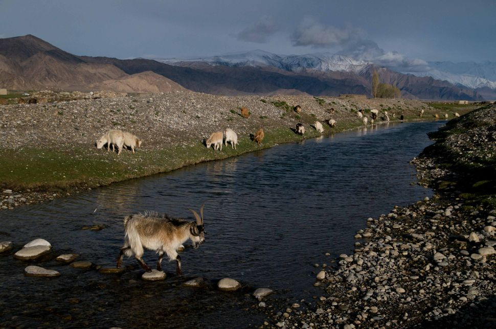 Goat crossing a stone bridge, near Tashkurgan