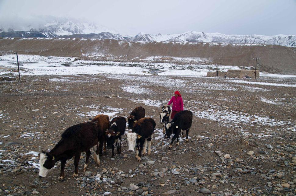 Herdswoman, Karakoram Highway
