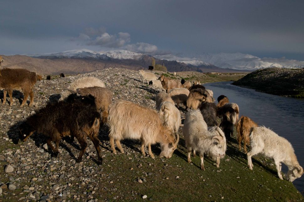 Sheep grazing near Tashkurgan