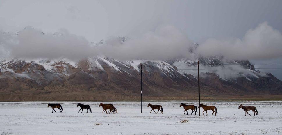 Wild, wild horses ...