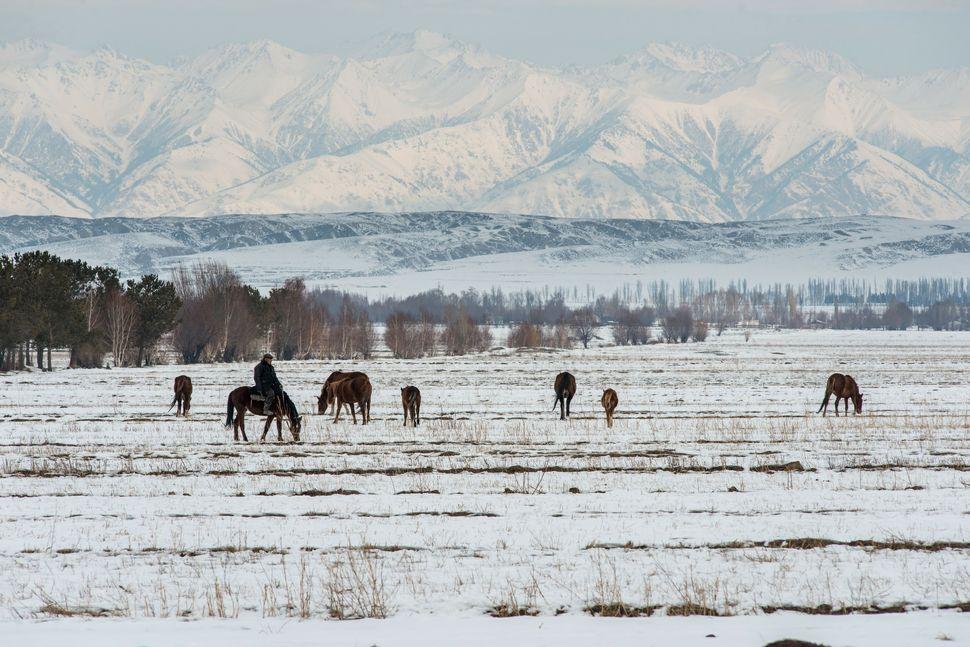 Horse rider near Issyk-Kul lake