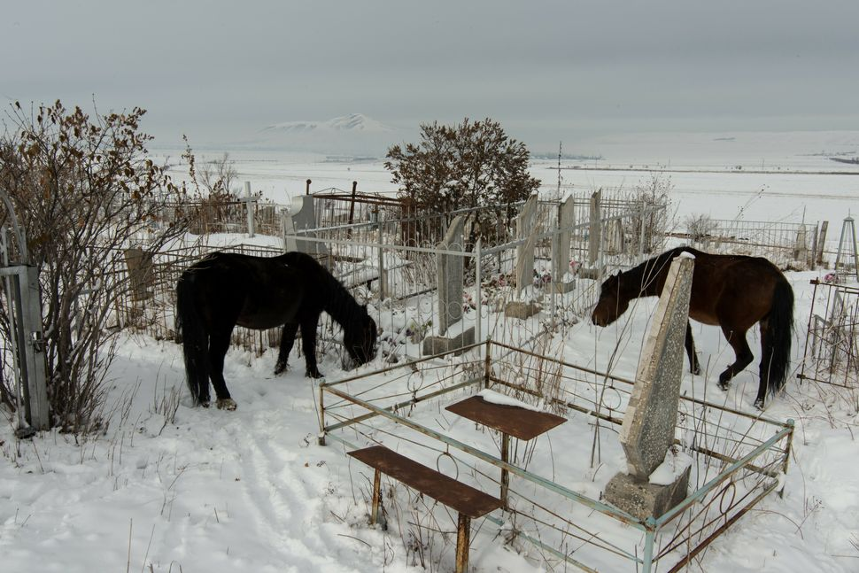 Horses in cemetery