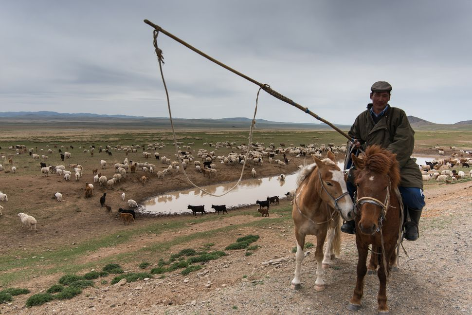 Countryside - Mongolian shepherd