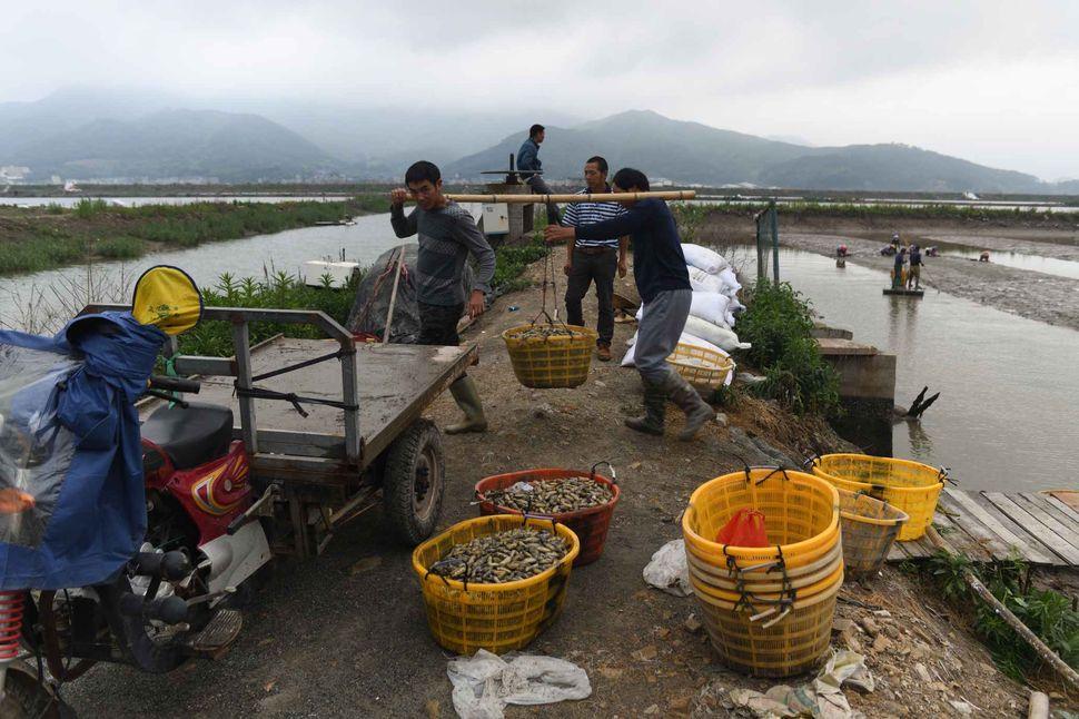 Toilers of the sea, Fujian (with Mazu goddess celebration)