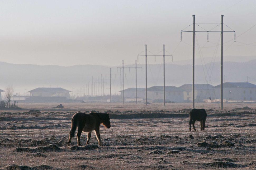 Grazing horses at dawn 3, Shangrila